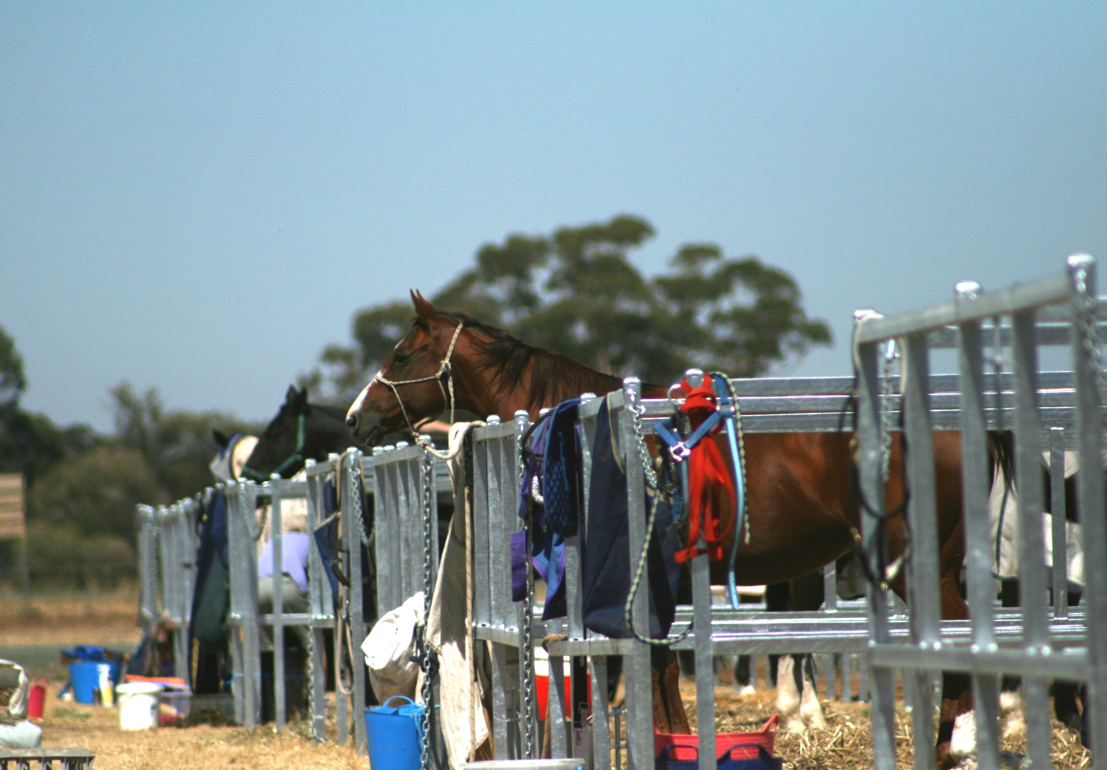 Stables & Day Yards